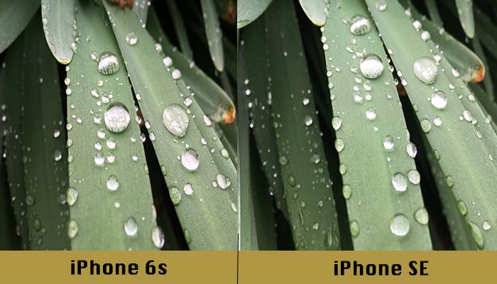 iphone-se-ve-iphone-6s